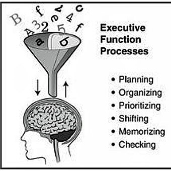 Executive Function main